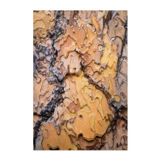Ponderosa pine bark, Washington Acrylic Wall Art