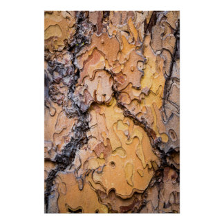 Ponderosa pine bark, Washington Poster