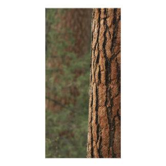 Ponderosa Pine Photo Card