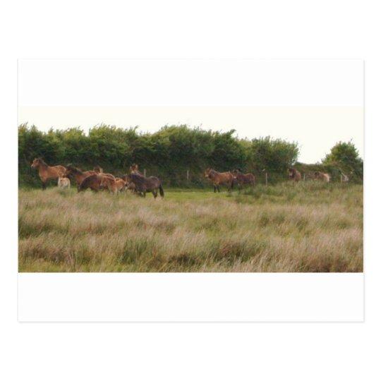 ponies.jpg postcard
