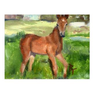 Pony aceo Postcard
