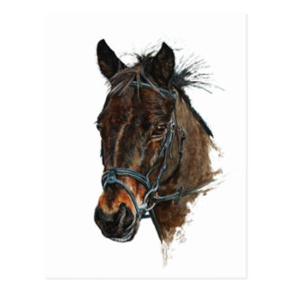 pony head study art postcard
