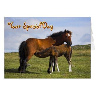 Pony Mare Feeding Foal birthday card