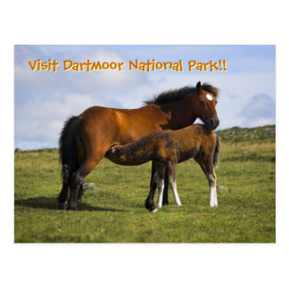 Pony Mare Feeding Foal postcard