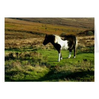 Pony on Dartmoor Card