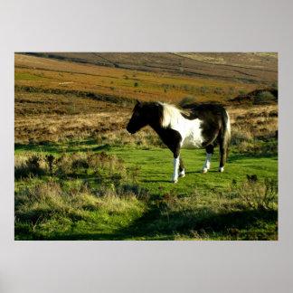Pony on Dartmoor Poster