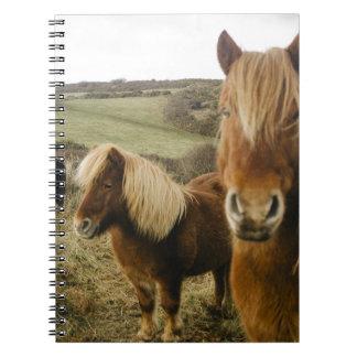 Pony Ponies Horse Horses book notebook