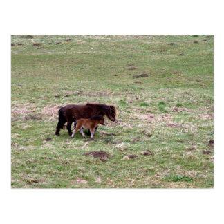 Pony with foal postcard