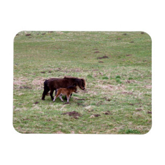 Pony with foal magnets