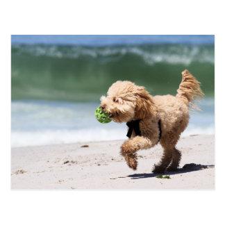 Poodle - Apricot - Poodle Play Postcard