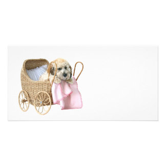 Poodle baby buggy photo card