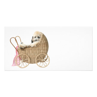 Poodle baby buggy photo card template