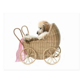 Poodle baby buggy postcard