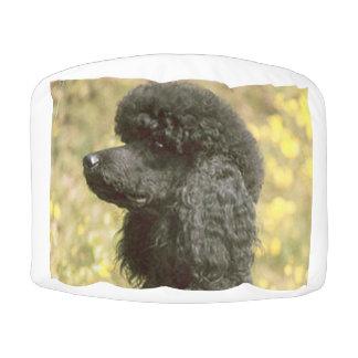 poodle black pouf