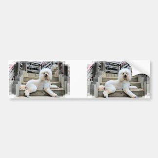 Poodle - Brulee - Trainer Bumper Sticker