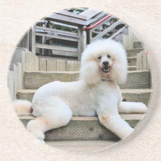 Poodle - Brulee - Trainer Drink Coaster