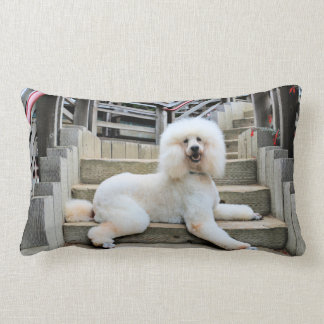 Poodle - Brulee - Trainer Lumbar Pillow