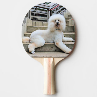 Poodle - Brulee - Trainer Ping Pong Paddle