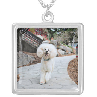 Poodle - Brulee - Trainer Silver Plated Necklace