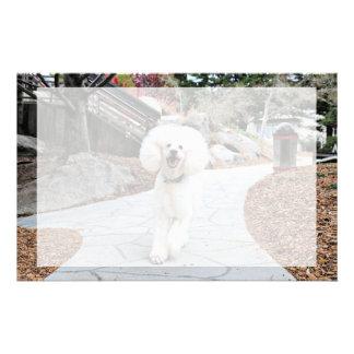 Poodle - Brulee - Trainer Stationery