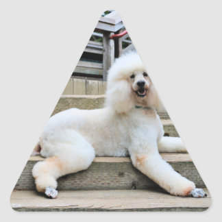 Poodle - Brulee - Trainer Triangle Sticker