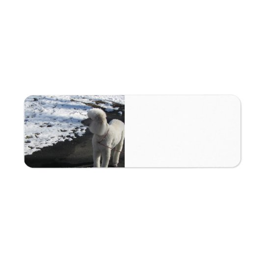 Poodle by the Snow Return Address Label