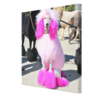 Poodle Day 2016 - Barnes - Pink Standard Poodle Canvas Print