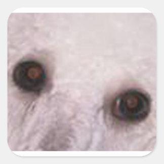 poodle eyes white square sticker
