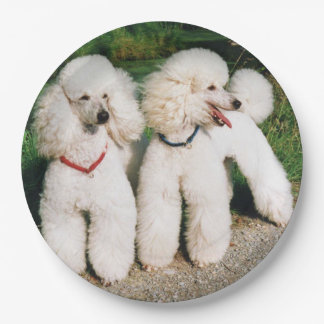 poodle group white paper plate