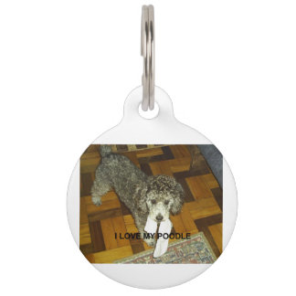 poodle love w pic silver pet name tag