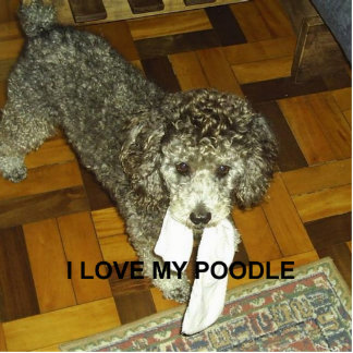 poodle love w pic silver photo sculpture keychain