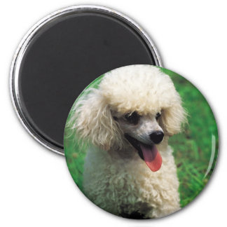 Poodle On Grass Magnet
