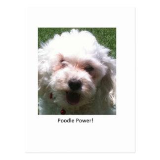 Poodle Power Postcard