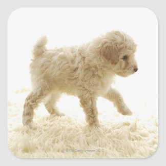 Poodle Puppy Square Sticker
