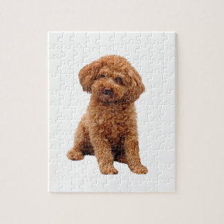 Poodle - Toy (Apricot) Jigsaw Puzzle