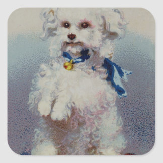 Poodle with blue ribbon square sticker