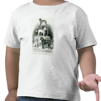 Poodles and Whippet - Group of Mr. Walton's T-shirts