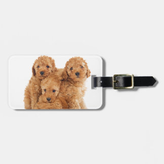 Poodles Luggage Tag