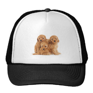 Poodles Trucker Hat