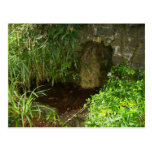 Pool Capturing Waters From St. Brigids Holy Well, Postcard