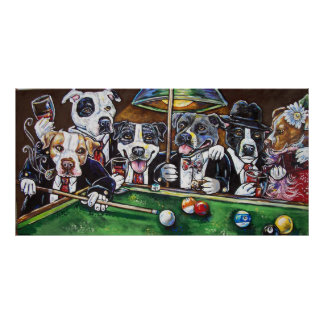 pool dogs poster
