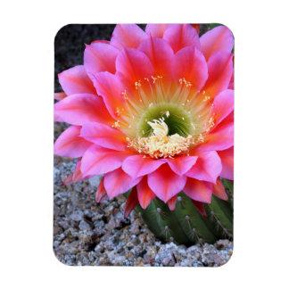 Pop of pink cactus magnet