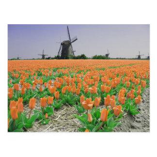 Popart Windmills Orange Tulips Postcard