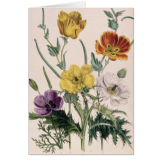 Poppies and Anemones Card
