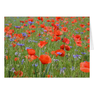 Poppies and Cornflowers Card