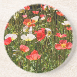 Poppies Beverage Coaster