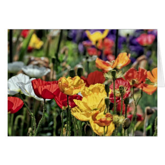 Poppies in the Sun Card