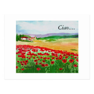Poppies In Tuscany Postcard
