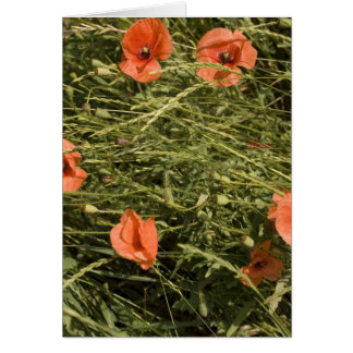 poppies in wheat card