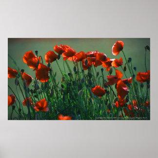 Poppies No. 3 | Canvas Print